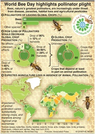 ENVIRONMENT: World Bee Day infographic