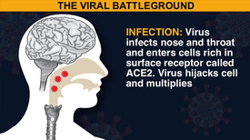 HEALTH: How coronavirus kills video animation infographic