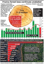 ENVIRONMENT: Global deforestation increase infographic