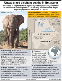 AFRICA: Mystery elephant deaths infographic
