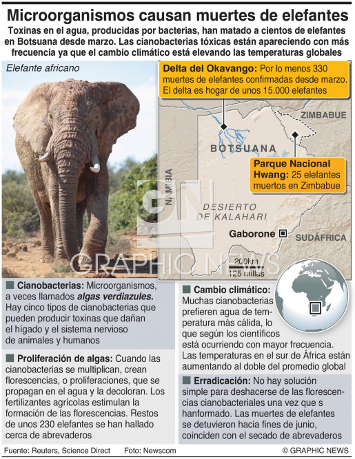 Muertes de elefantes vinculadas con bacterias infographic