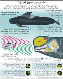 بيئة: ما هو سبب جنوح الحيتان؟ infographic