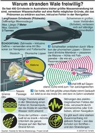 UMWELT:Warum stranden Wale freiwillig? infographic