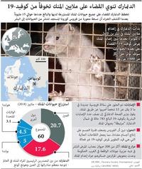 صحة: الدنمارك تنوي القضاء على ملايين المنك تخوفاً من كوفيد ١٩ infographic