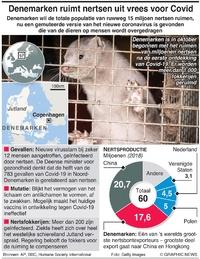 GEZONDHEID: Denemarken ruimt miljoenen nertsen uit vrees voor Covid infographic