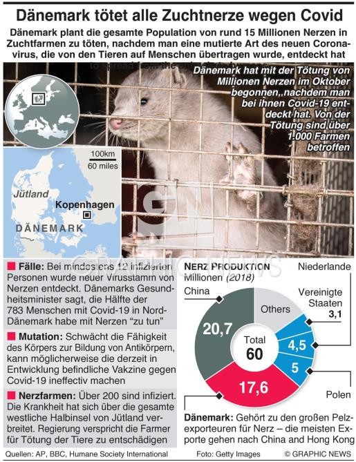 Dänemark tötet Millionen Nerze aus Angst vor Covid infographic