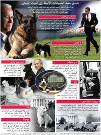 ترفيه: بايدن يعيد الحيوانات الأليفة إلى البيت الأبيض infographic