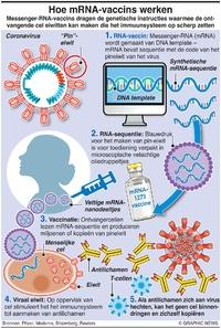 GEZONDHEID: Hoe mRNA-vaccins werken infographic