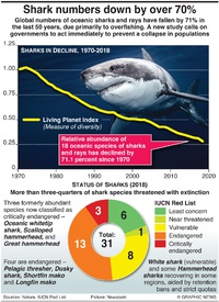 ENVIRONMENT: Shark numbers down by over 70% infographic