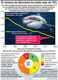 AMBIENTE: La cifra de tiburones cae más de 70% infographic