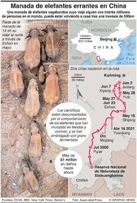 NATURALEZA: La manada errante de elefantes de China infographic