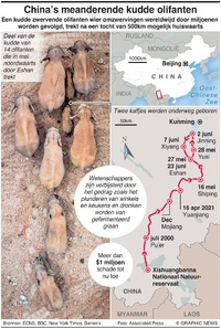 NATUUR: China's meanderende kudde olifanten infographic