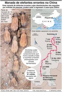 NATUREZA: Manada de elefantes errantes na China infographic