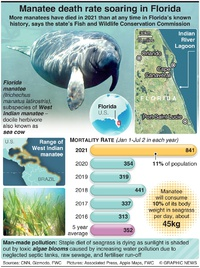 NATURE: Manatee death rate soaring in Florida infographic