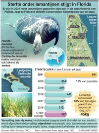 NATUUR: Sterfte onder lamantijnen stijgt in Florida infographic