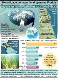 NATUREZA: Taxa de mortalidade do manatim dispara na Florida infographic