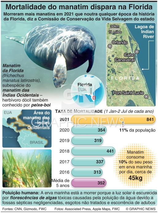 Taxa de mortalidade do manatim dispara na Florida infographic