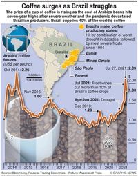 BUSINESS: Brazil coffee crisis infographic