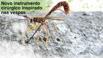 SAÚDE: NoOvo instrumento cirúrgico inspirado nas vespas, vídeo infographic