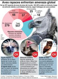 AMBIENTE: Descenso global de aves de presa infographic
