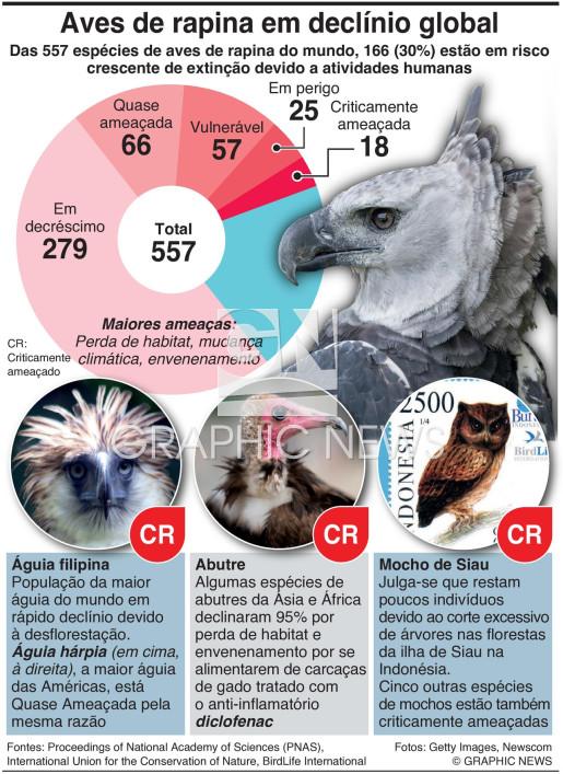 Aves de rapina em declínio global infographic