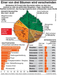 UMWELT: Baumsterben infographic