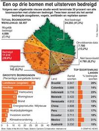MILIEU: Uitsterven bomen infographic
