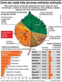 AMBIENTE: Extinção de árvores infographic
