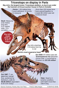 BUSINESS: World's largest triceratops infographic