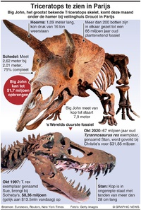 BUSINESS: 's Werelds grootste triceratops infographic