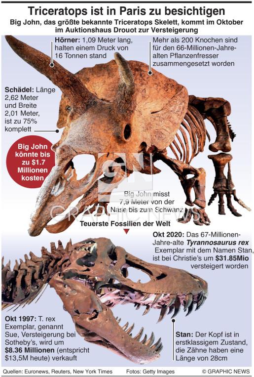 Größter Triceratops der Welt infographic