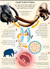 علوم: محاولة لاستعادة الماموث infographic