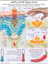 علوم: مجسات بروتينية للإحساس والشعور infographic