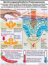 WISSENSCHAFT: Temperaturempfinden infographic