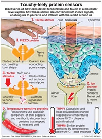 SCIENCE: Temperature touch sensors infographic