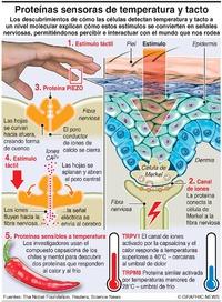 CIENCIA: Sensores de temperatura y tacto infographic