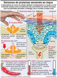 CIÊNCIA: Sensores de temperatura e toque infographic