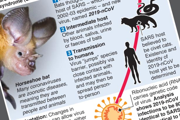 Scientists think new coronavirus came from bats