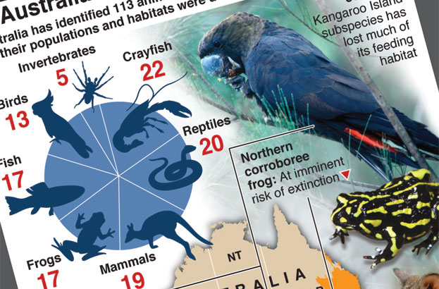 Australia's bushfires brought 113 species closer to extinction
