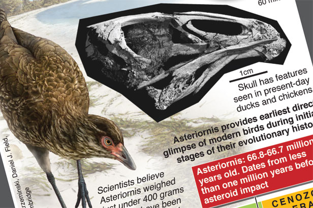 World's oldest bird discovered