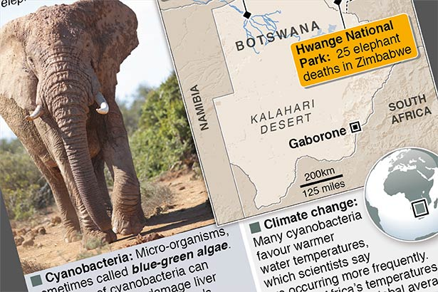Elephant deaths linked to bacteria