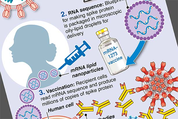 How messenger mRNA vaccines work