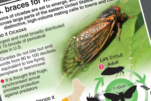 U.S. braces for mass arrival of cicadas