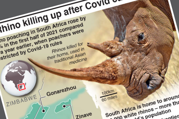 Rhino killing up after Covid curbs end