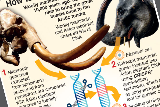 Scientists plan to bring back mammoth