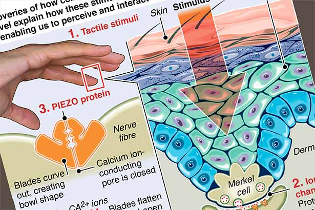 Touchy-feely protein sensors win Nobel Prize